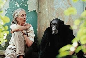 Jane Goodall with Freud the Cimpanzee