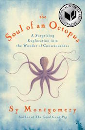 soulofanoctopus_cover